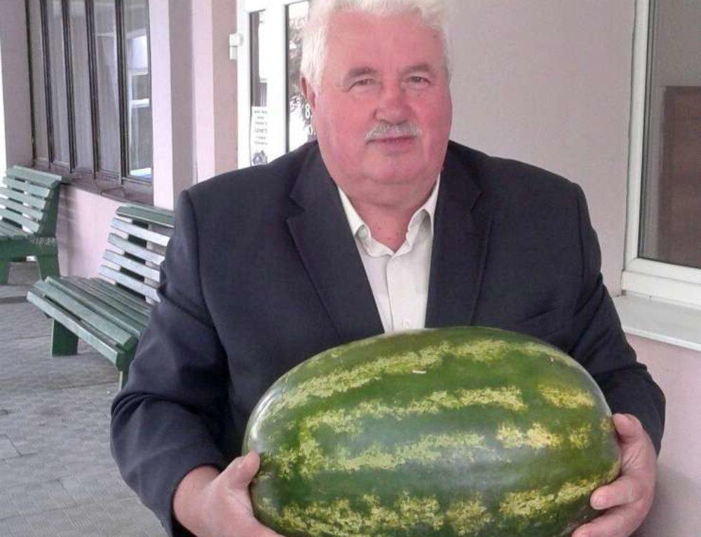 Технология возделывания арбуза в условиях Беларуси