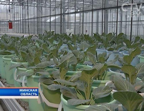 Сельское хозяйство в Беларуси: что скрыто от глаз потребителей и как выращивают продукцию зимой